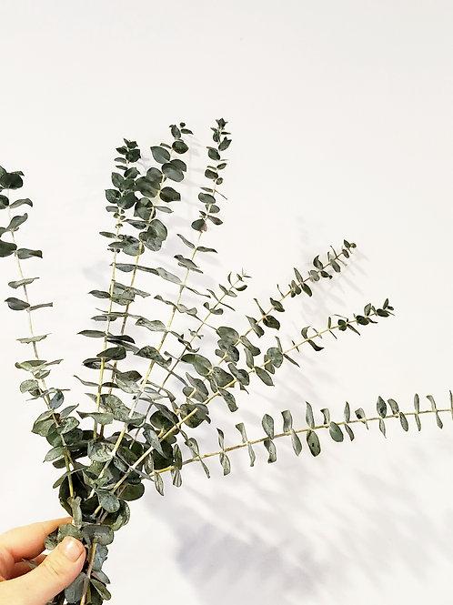 Shower Eucalyptus bunches - Koko Mod Flower Design