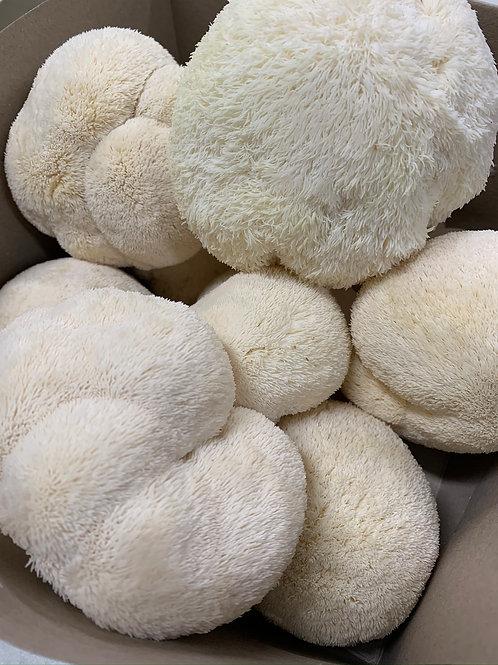 Fresh Lion's Mane Mushroom (0.5 lb box) - Happy Caps Mushroom Farm