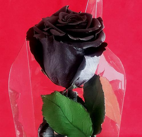 Immortal Rose - Black