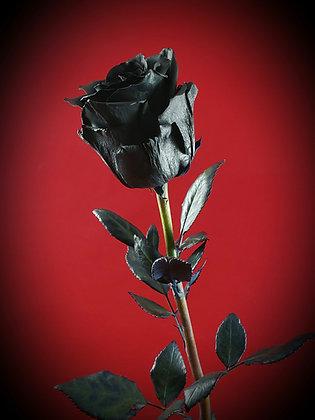 The Immortal Rose - Black