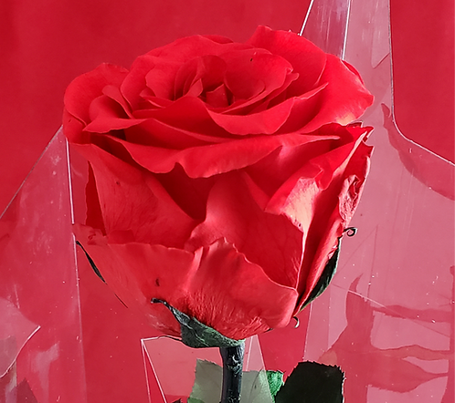 Immortal Rose - Red