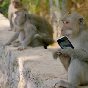 Be careful of those monkey visits while on cruises