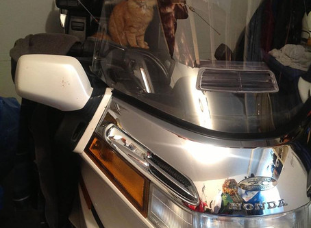 The Goldwing and the Cat