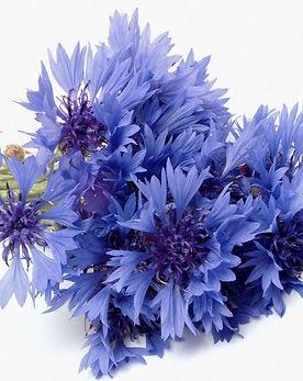 fiordaliso,-bouquet-231971.jpg