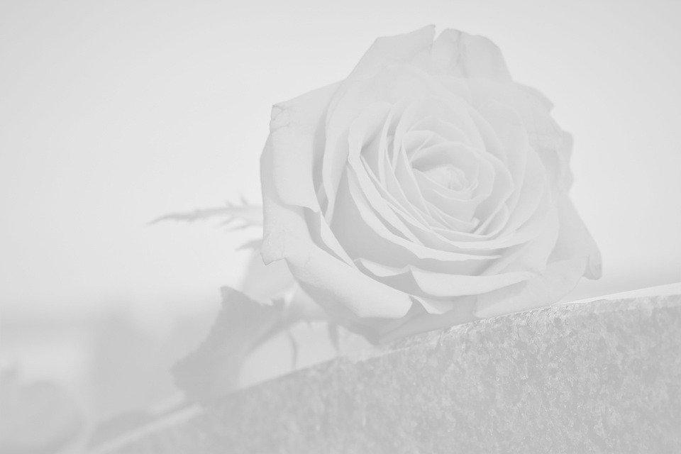 rose-4594713_960_720_edited_edited.jpg