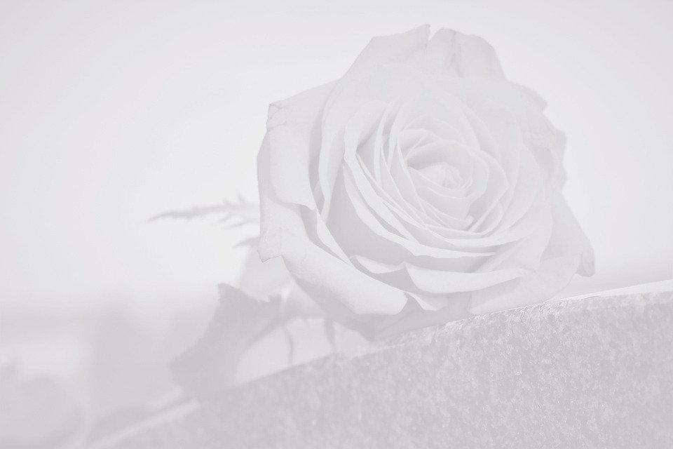 rose-4594713_960_720_edited_edited_edite