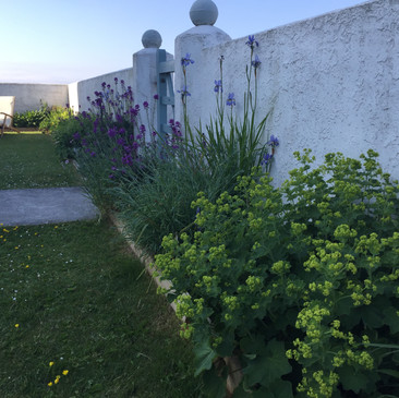 May border flowers