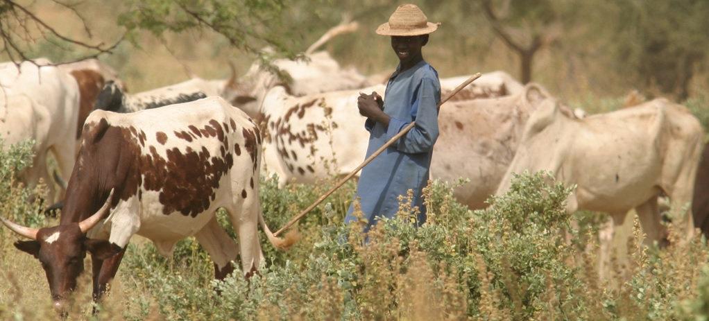 smallholder farm.jpg