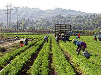 Farmworkers working in farm area