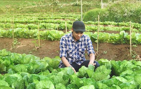farmer control on cabbage field.jpg