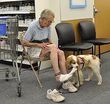 Service Dog Katie.jpg