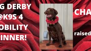 Dog Derby Success