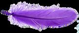DG Purple Feather.png