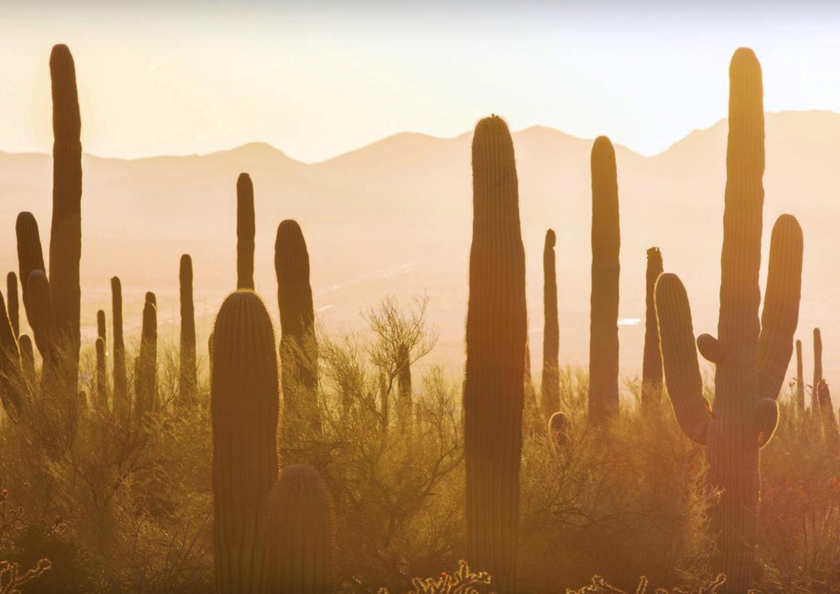Tucson, AZ Desert
