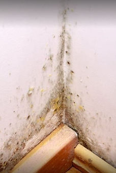 wall with mold.JPG