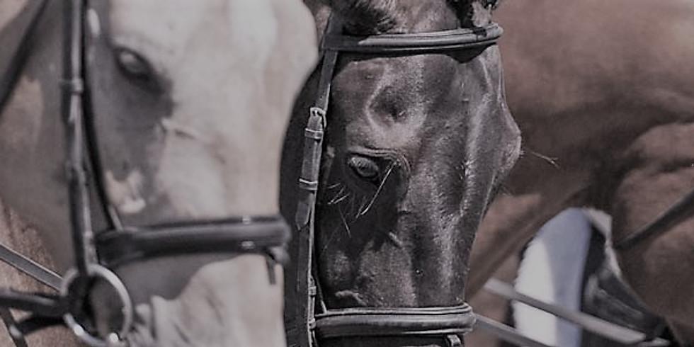 Equine Canada Rider Levels