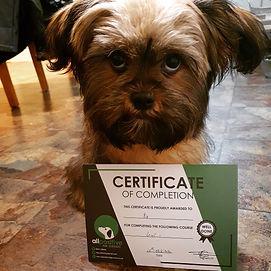 November Hall of Fame All Positive Dog Services