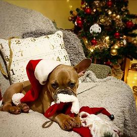 December Hall of Fame All Positive Dog Services