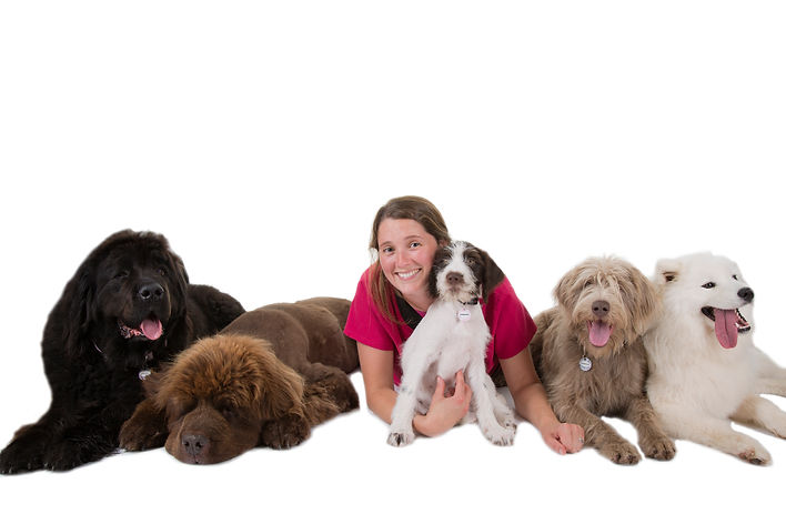 Canine Conditioning Herefordshire