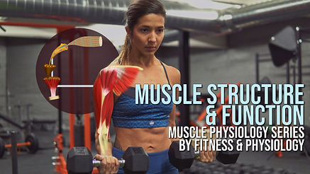 Muscle structure and function course