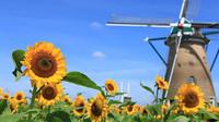 佐倉市の風車