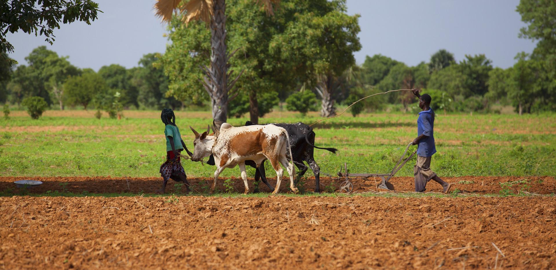 Paysans du Mali