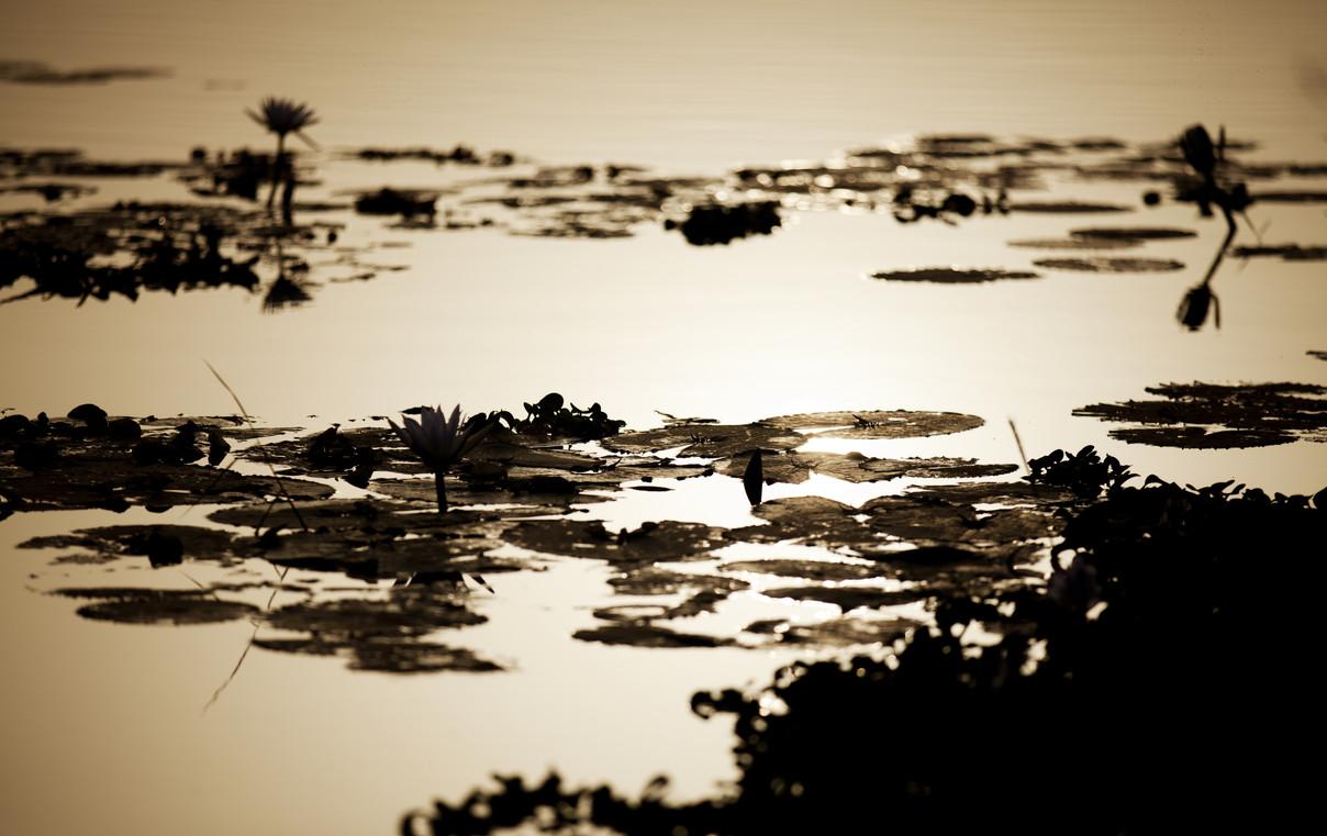 Le fleuve Niger