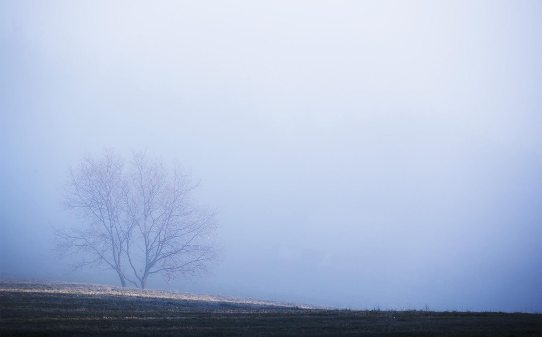 Brouillard sur la campagne