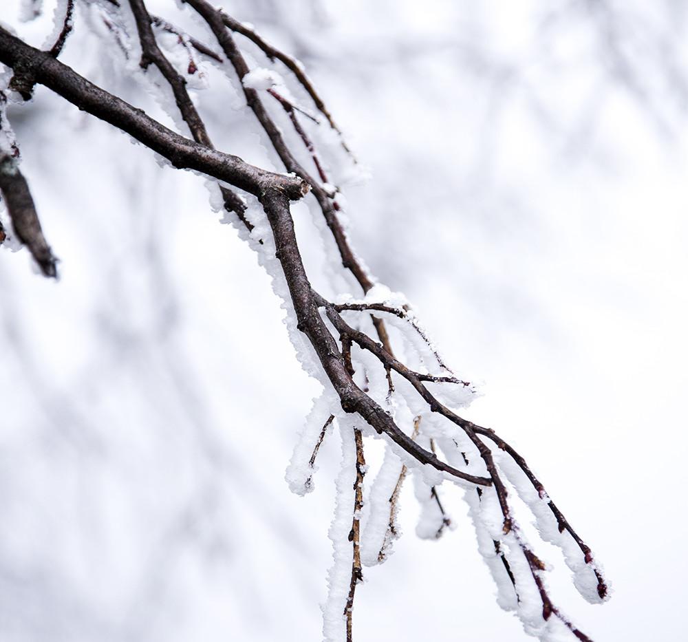 Givre d'hiver