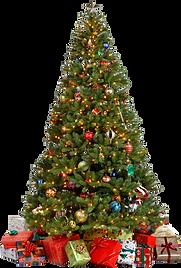 christmas_tree_PNG145.png