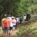Camp Evergreen line kids.jpg