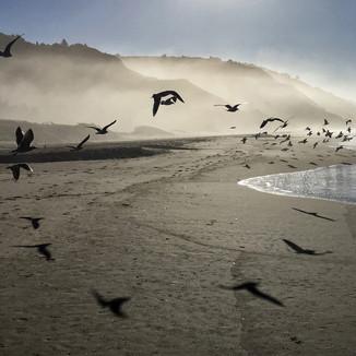 birds flying11x14.jpg