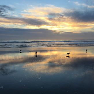 Reflective Gulls