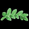 Les feuilles peintes 2