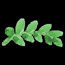 Painted Leaves 2