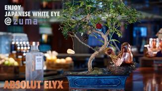 Abosulut Elyx Cocktail