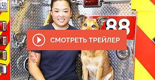 Dogs-With-Extraordinary-Jobs-2.jpg