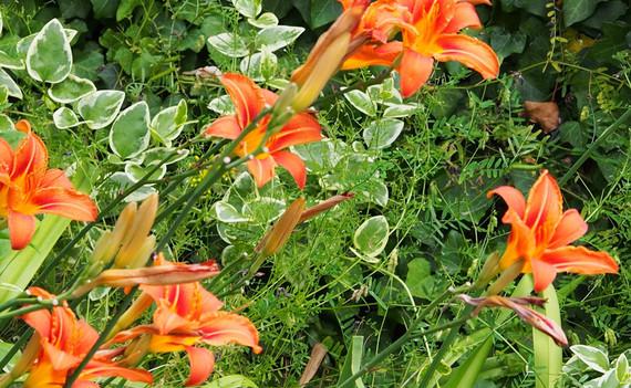 Fleurs oranges 1000.jpg