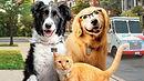 Como Cães e Gatos 3 - Peludos Unidos