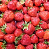 fraise5.jpg