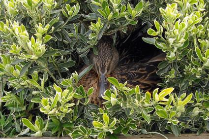 Makeshift Nest