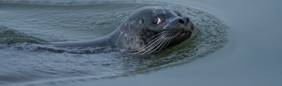 Shot at a different time from number 2, this seal looks at me when it hears the camera.