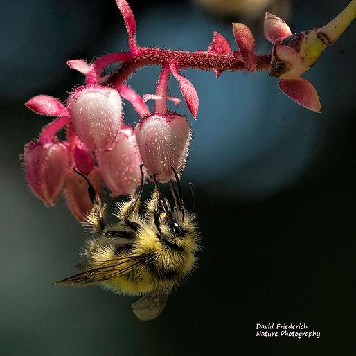 Bee taking nectar