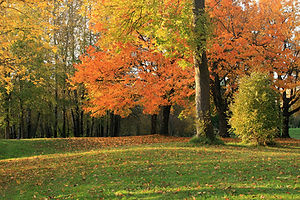 seasonal-changes-in-a-park-gino-rigucci.jpg
