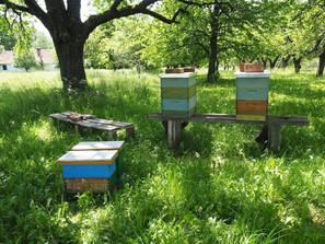 unsere Bienen.jpg
