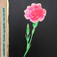 Carnation:  Love Unto Death