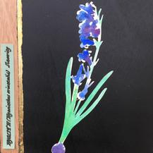 Hyacinth:  Sincerity