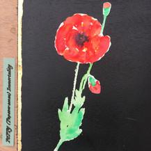 Poppy:  Immortality