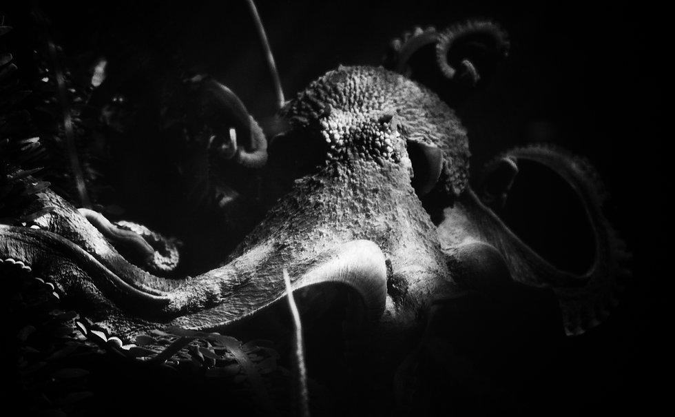 Octopus photo.jpg