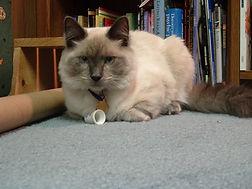 Drew kitty.jpg